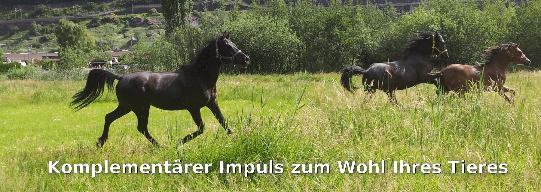 Animal Impuls